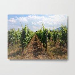 French Vineyards Metal Print