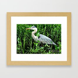 Heron On The Trails Framed Art Print