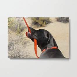 Dog in Joshua Tree National Park Metal Print