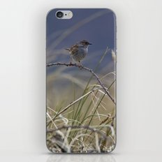 Dunnock iPhone & iPod Skin
