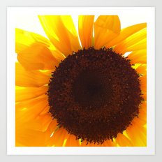 FLOWER 035 Art Print