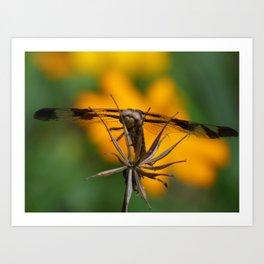 garden dragonfly 2017 Art Print