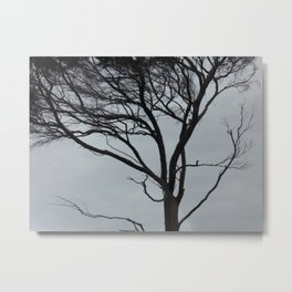 Gnarly Wind Swept Tree Metal Print