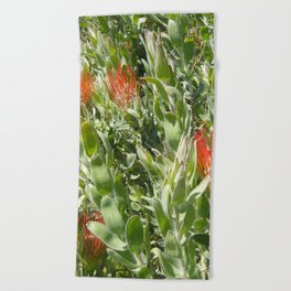 Proteas Beach Towel