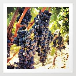 Napa Valley Grapes Art Print