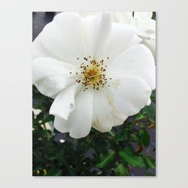 Nothing's perfect Canvas Print