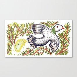 Lola the Pigeon Canvas Print