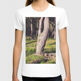 GREEN FOREST T-shirt