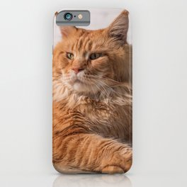 Purebred red Maine Coon cat lying on the floor at home iPhone Case
