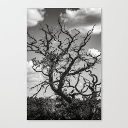 Ancient Tree, Survivor, Alive Canvas Print