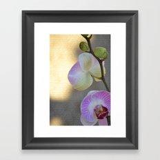 Pretty Orchids Framed Art Print