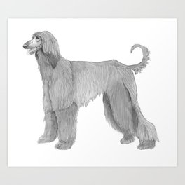 Afghan hound Art Print