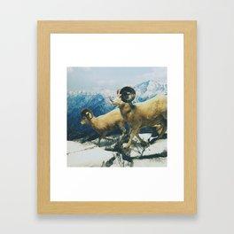 Museum Wildlife Framed Art Print