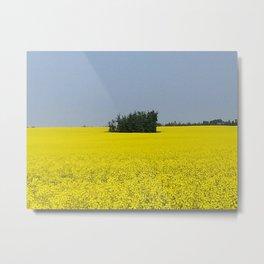 Canola Field, Alberta, Canada Metal Print