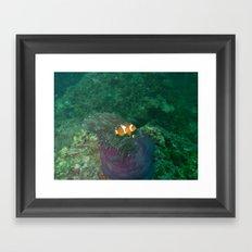 Nemo has been found Framed Art Print