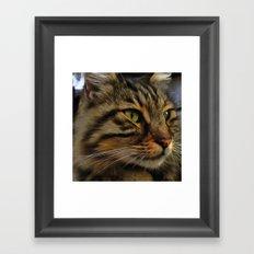 Aslan The Long Haired Tabby Cat Framed Art Print