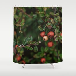 Chinese Firethorn Plant Printable Wall Art   Floral Flower Botanical Nature Outdoors Macro Photography Print Shower Curtain