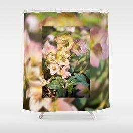 Helleborre pink flowering poisonus plant Shower Curtain