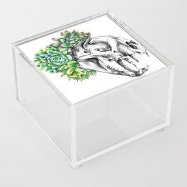 Rock Rose Cat Skull Acrylic Box
