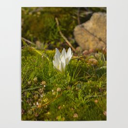 Micro World, Sleep of Little Maiden, flower in moss Poster