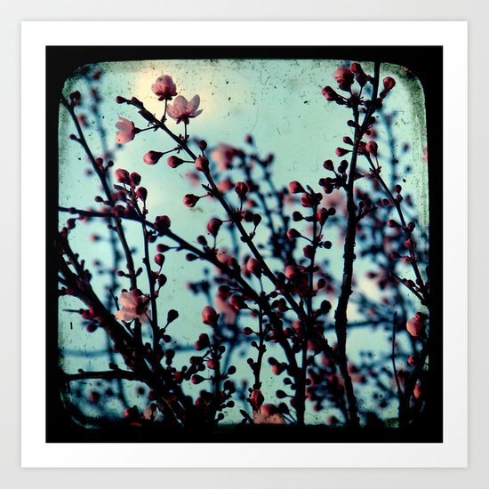 Spring Blossoms - Through The Viewfinder (TTV) Art Print