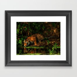 The Royal Bengal Tiger ( Framed Art Print