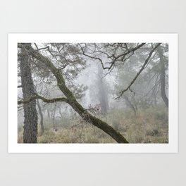 Foggy oaks. Into the woods.... Art Print