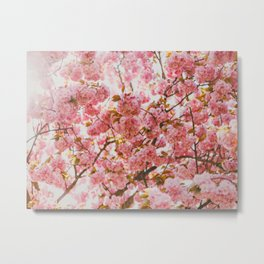 Beautiful Bundles Of Pink Cherry Blossoms In Full Bloom Japanese Sensibility Metal Print