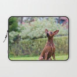 Outdoor portrait of a red miniature pinscher dog sitting on grass Laptop Sleeve