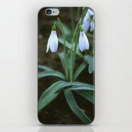 Crimean Snowdrop Closeup  iPhone Skin