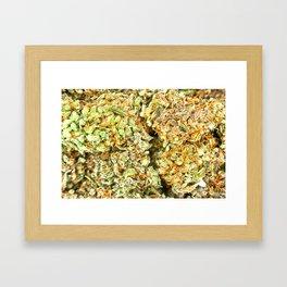 Dedicated Medicator pt.1 (LSD strain) Framed Art Print