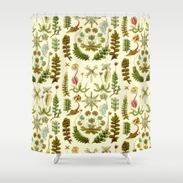 Ernst Haeckel - Hepaticae Shower Curtain