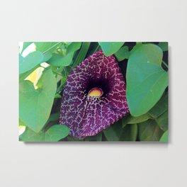Calico Flower Metal Print
