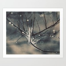 a web in the branches Art Print