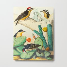 Monograph of the Picides Alfred Malherbe 1861 Vintage Bird Cactus Flower Illustration Metal Print