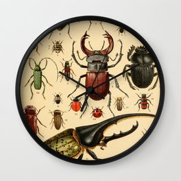 Popular History of Animals Beetles Vintage Scientific Illustration Educational Diagrams Wall Clock