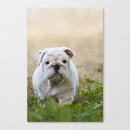 Walking Wrinkles Canvas Print