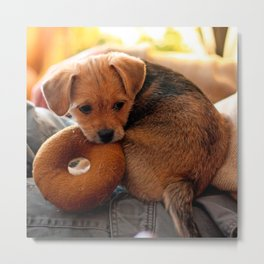 puppy biting her toy Metal Print