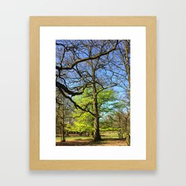 Spring In An English Park Framed Art Print