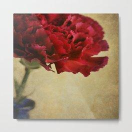 Single Dark red Carnation flower in deep blue bottle. Metal Print