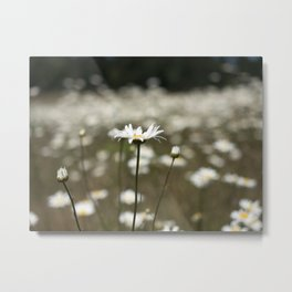 Wildflowers in an Oregon Field Metal Print