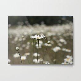Wildflowers in an Oregon Field Metal Print