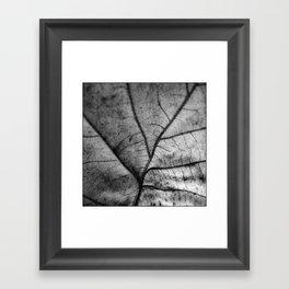 'Nature Network' Framed Art Print