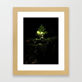 Nighttime in the Garden, 3 Framed Art Print