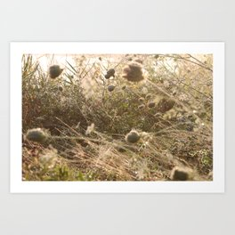 Washed in the gentle dawn Art Print