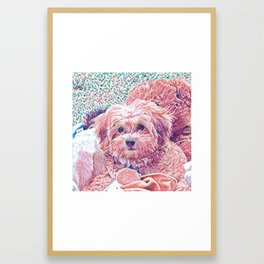 Copper the havapookie as a puppy Framed Art Print