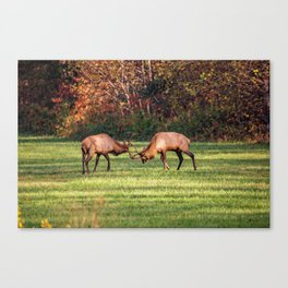 Elk Sparring Great Smoky Mountains Canvas Print