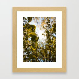 Depth of Season Framed Art Print