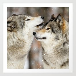 Winter Wolves Kunstdrucke