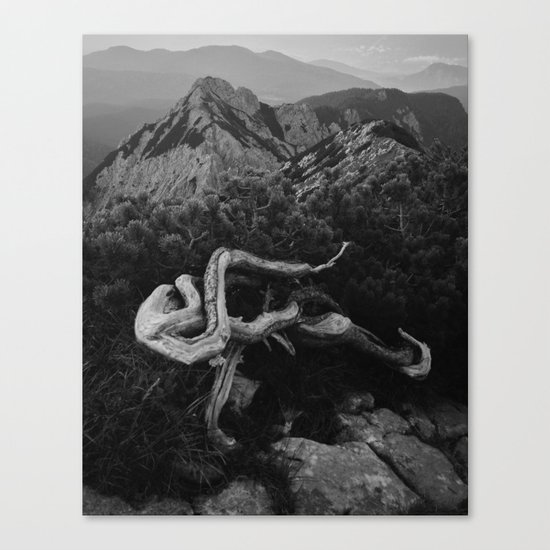 Mountain Pine Root Octopus Canvas Print